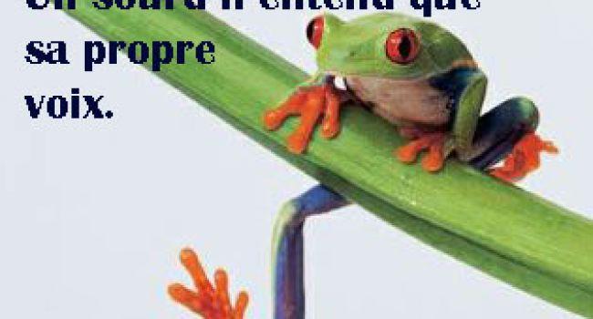 La course de grenouilles